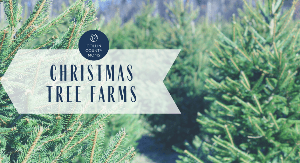 christmas tree farms in collin county